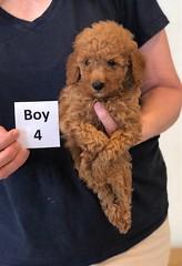 Lola Boy 4 pic 2 2-13
