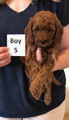 Lola Boy 5 pic 4 2-13