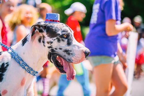 Big Dog, Little Hat