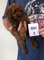 Lola Girl 2 2-13