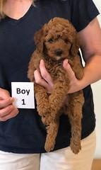 Lola Boy 1 pic 2 2-13
