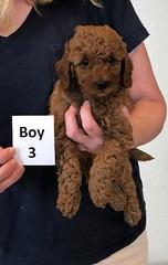 Lola Boy 3 2-13