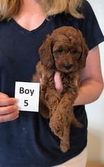 Lola Boy 5 pic 3 2-13