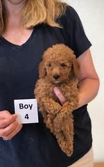 Lola Boy 4 pic 4 2-13