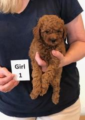 Lola Girl 1 pic 2 2-13