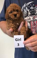Lola Girl 3 pic 2 2-13
