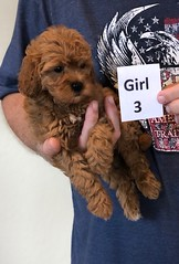 Lola Girl 3 pic 4 2-13