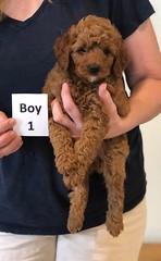 Lola Boy 1 pic 4 2-13