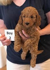 Lola Boy 2 pic 2 2-13
