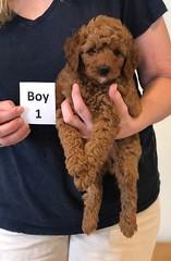 Lola Boy 1 pic 3 2-13