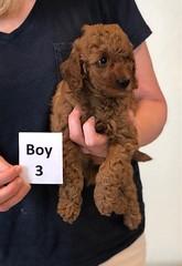 Lola Boy 3 pic 2 2-13