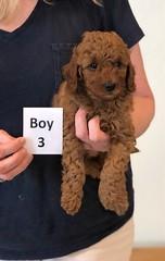 Lola Boy 3 pic 4 2-13