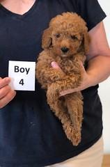Lola Boy 4 2-13