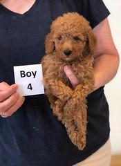 Lola Boy 4 pic 3 2-13