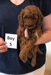 Lola Boy 5 pic 2 2-13