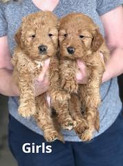 Ginger Girls pic 4 2-13