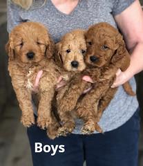 Ginger Boys pic 3 2-13