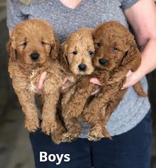 Ginger Boys pic 2 2-13