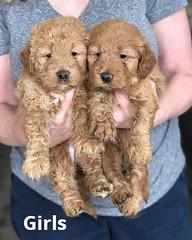 Ginger Girls pic 3 2-13
