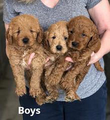 Ginger Boys pic 4 2-13