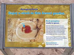 Pumpkin Patch - Anza-Borrego Desert State Park