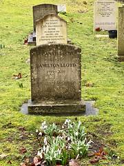 Photo of Litchfield