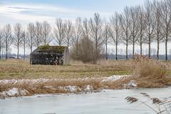 Wintertime, Biesbosch, Dordrecht