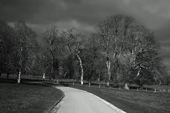 Photo of Sunlight on Trees