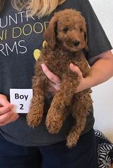 Lola Boy 2 pic 3 2-19