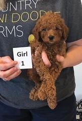 Lola Girl 1 pic 2 2-19