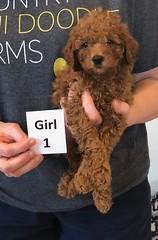 Lola Girl 1 pic 4 2-19