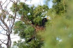 Hidden blackbird