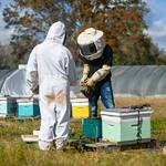 Beekeeping at Sankofa Farms