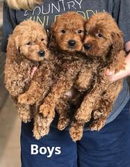 Ginger Boys pic 2 2-19