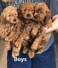 Ginger Boys 2-19