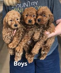 Ginger Boys pic 4 2-19