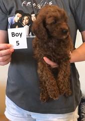 Lola Boy 5 pic 3 2-19