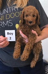 Lola Boy 2 pic 4 2-19