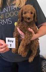 Lola Boy 2 2-19