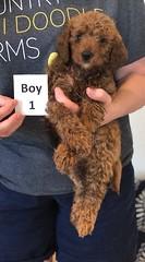 Lola Boy 1 pic 3 2-19