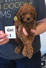 Lola Girl 1 2-19