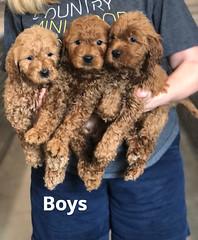 Ginger Boys pic 3 2-19