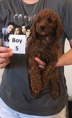 Lola Boy 5 pic 4 2-19