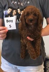 Lola Boy 5 pic 2 2-19