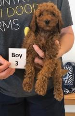 Lola Boy 3 pic 4 2-19