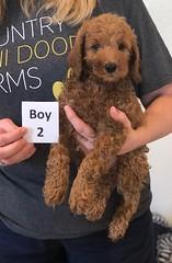 Lola Boy 2 pic 2 2-19