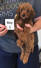 Lola Boy 1 pic 2 2-19