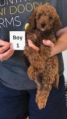 Lola Boy 1 pic 4 2-19