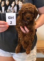 Lola Girl 2 pic 4 2-19
