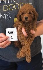Lola Girl 1 pic 3 2-19